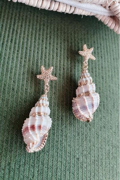 Star shell Star shell
