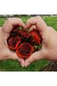Düğün Çiçeği Broş - Turuncu