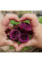 Düğün Çiçeği Broş - Mor
